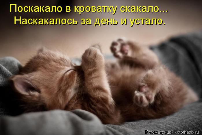 kotomatritsa_J9 (700x466, 42Kb)