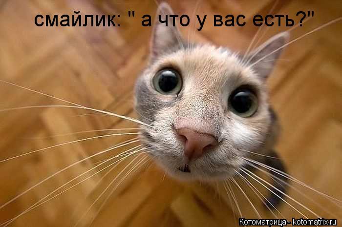 kotomatritsa_Tu (700x465, 42Kb)