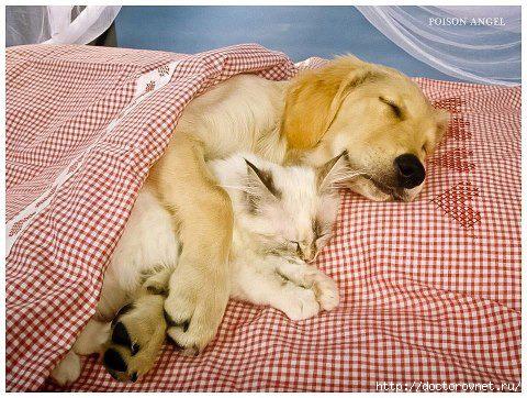 животные сон двоих (480x362, 158Kb)