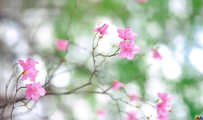 1278464110_1276035739_1271698928_flower_10-84 (700x413, 161Kb)