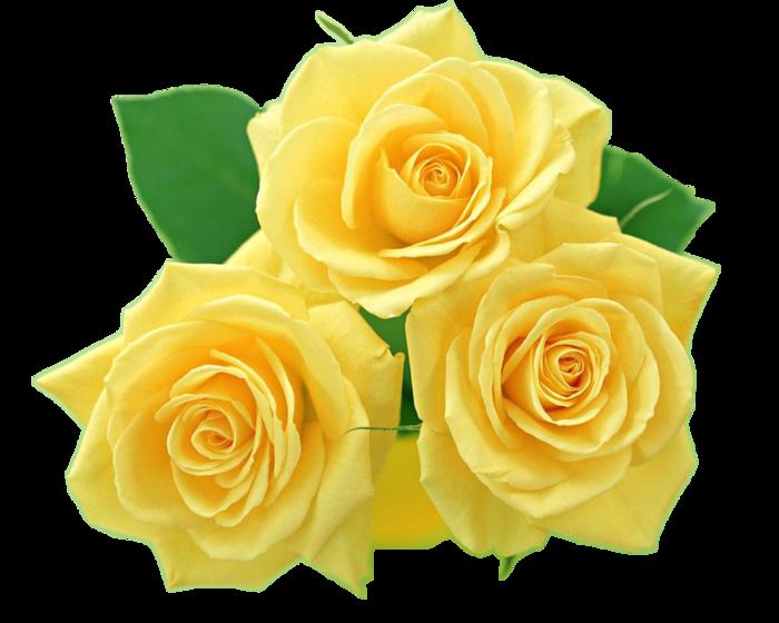 Красивые цветы на прозрачном фоне для фотошопа