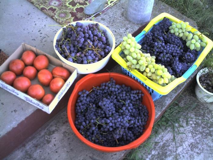 урожай винограда (700x525, 314Kb)