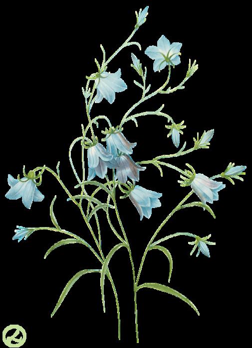 Ботанические картинки цветов 5