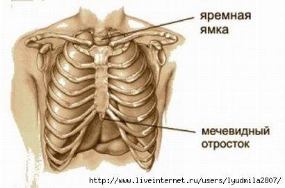 mechevidny_otrostok_1-300x198 (410x270, 51Kb)