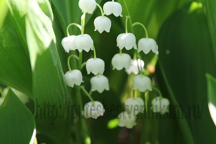 Красивые летние цветы2 (700x467, 109Kb)