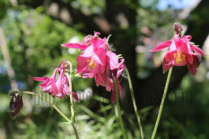 Красивые летние цветы3 (700x467, 152Kb)