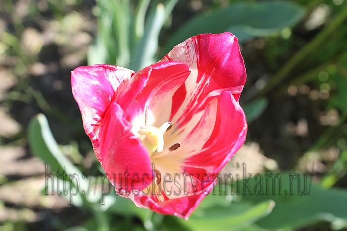 Красивые летние цветы8 (700x467, 149Kb)