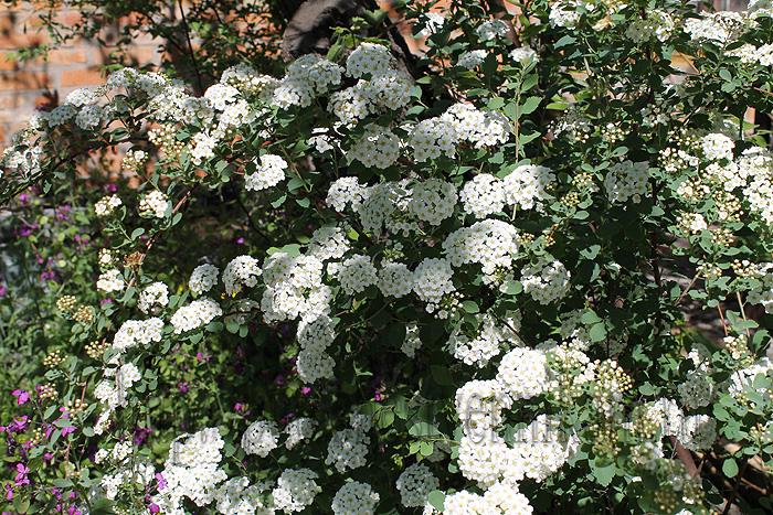 Красивые летние цветы10 (700x467, 379Kb)