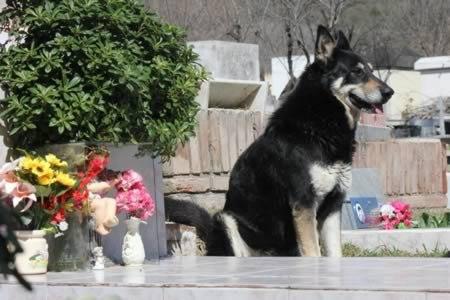 собака2 (450x300, 34Kb)