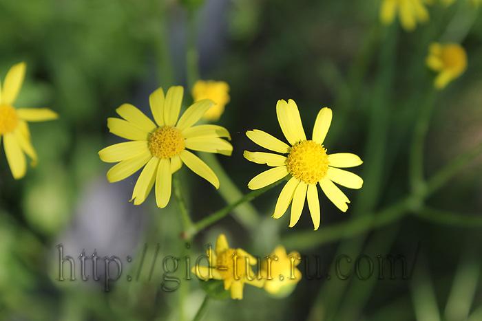 Красивые цветы (700x467, 111Kb)