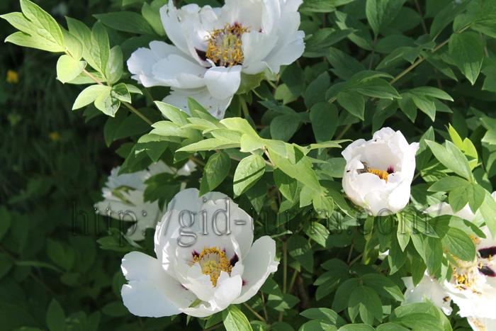 Летние цветы (700x467, 165Kb)