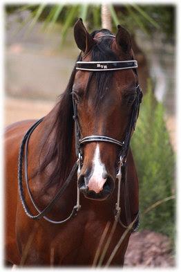 красивые фотографии лошадей (6) (262x393, 30Kb)