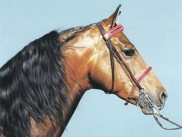 красивые фотографии лошадей (10) (600x450, 74Kb)