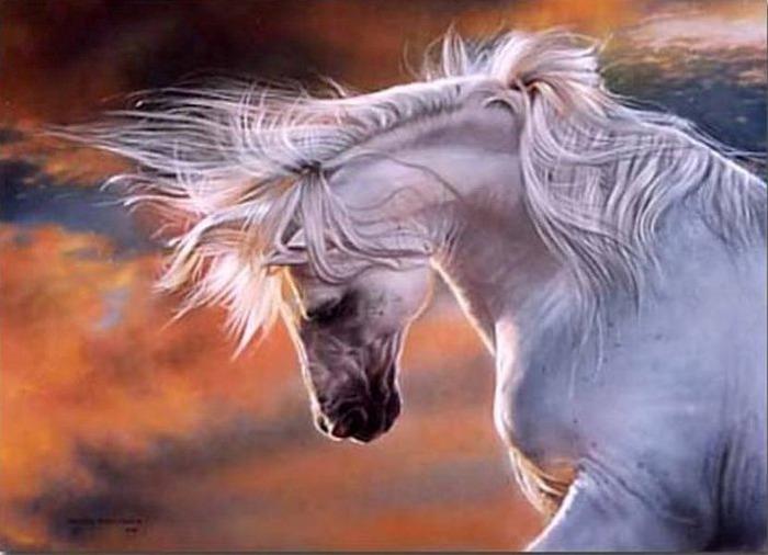 красивые фотографии лошадей (12) (700x506, 73Kb)