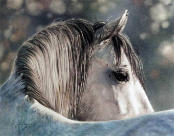 красивые фотографии лошадей (14) (700x545, 99Kb)