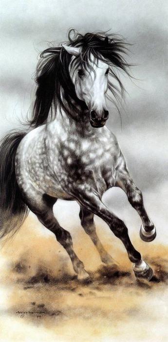 красивые фотографии лошадей (19) (345x700, 73Kb)