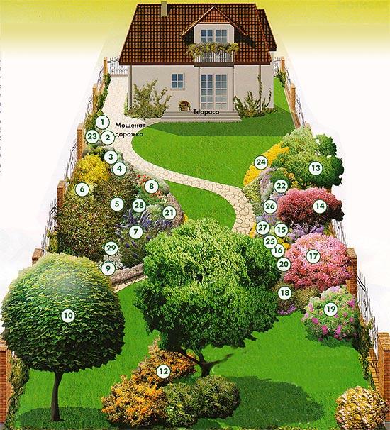 Как расположить кусты и деревья на участке и