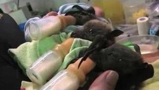 Детский дом для летучих мышей (315x179, 42Kb)