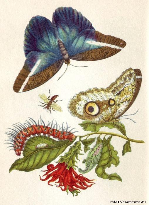 Картинки для декупажа. Бабочки, насекомые и растения (2) (508x700, 265Kb)