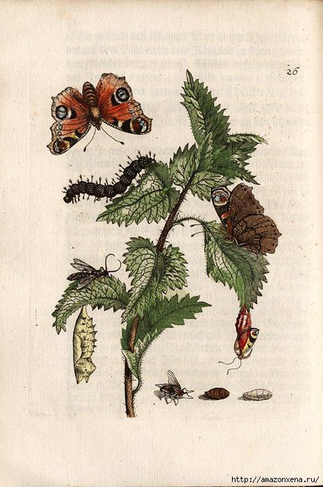 Картинки для декупажа. Бабочки, насекомые и растения (4) (465x700, 251Kb)