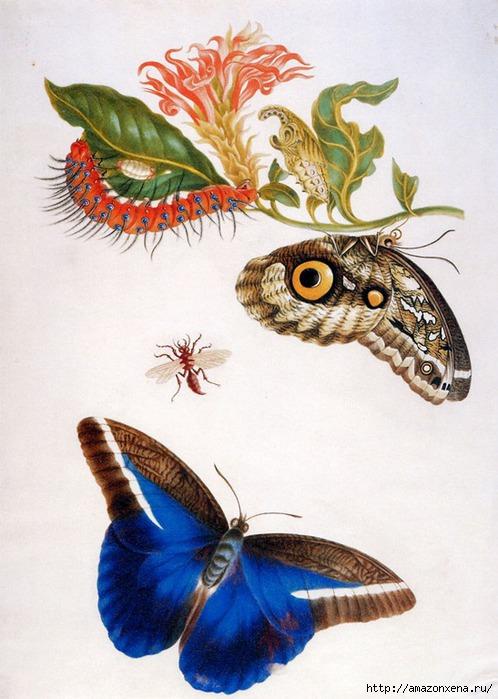 Картинки для декупажа. Бабочки, насекомые и растения (8) (498x700, 219Kb)