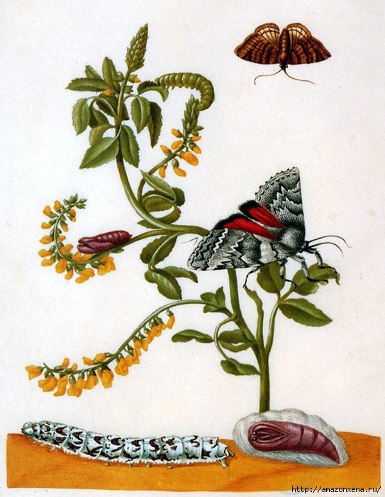 Картинки для декупажа. Бабочки, насекомые и растения (10) (543x700, 254Kb)