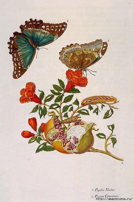 Картинки для декупажа. Бабочки, насекомые и растения (12) (463x700, 217Kb)