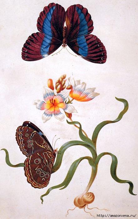 Картинки для декупажа. Бабочки, насекомые и растения (14) (441x700, 199Kb)