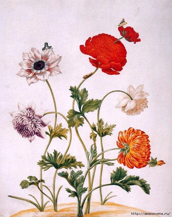 Картинки для декупажа. Бабочки, насекомые и растения (16) (555x700, 267Kb)