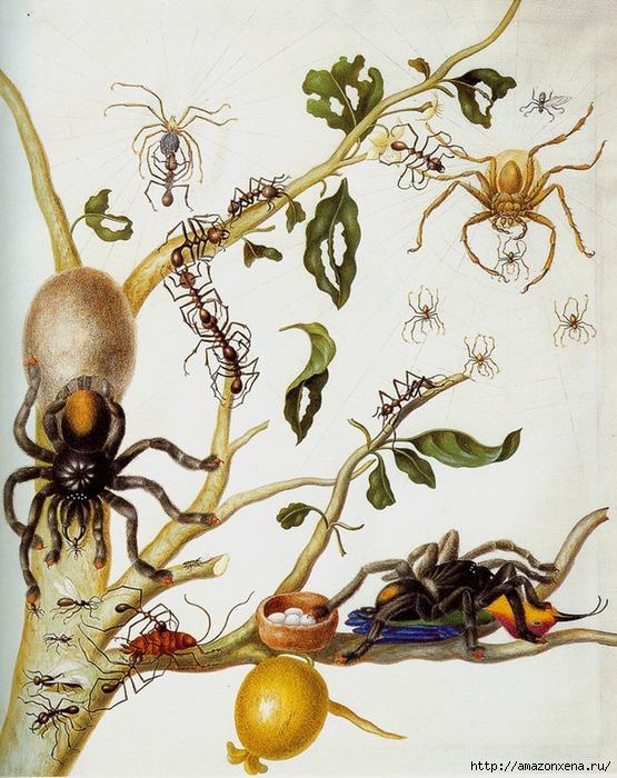 Картинки для декупажа. Бабочки, насекомые и растения (18) (555x700, 299Kb)