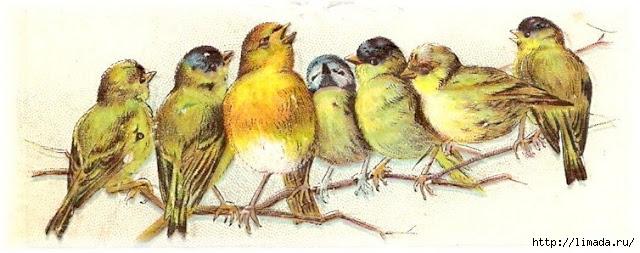 bird 3 (640x253, 139Kb)