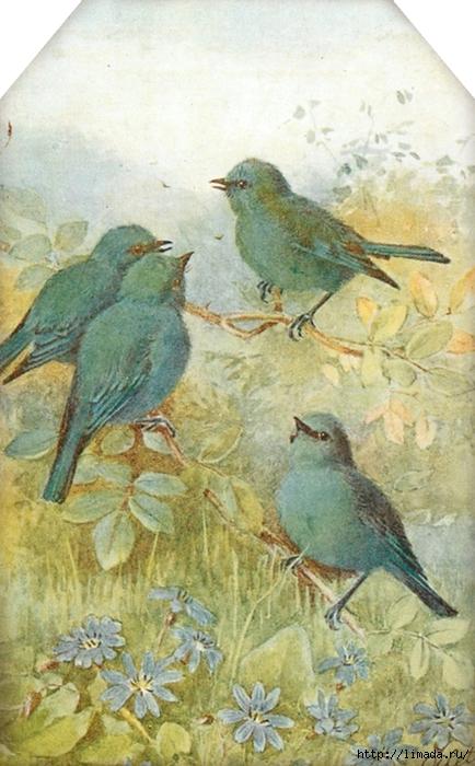 Sweet bird tag 1 ~ lilac-n-lavender (434x700, 256Kb)