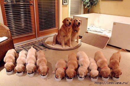 картинка дня семья собак (440x293, 88Kb)