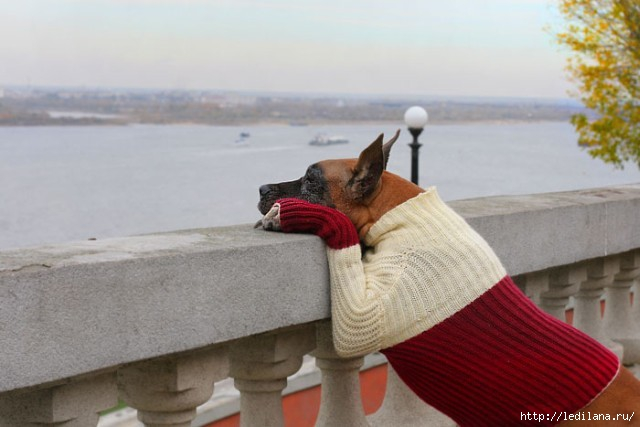 собака печаль (640x427, 117Kb)