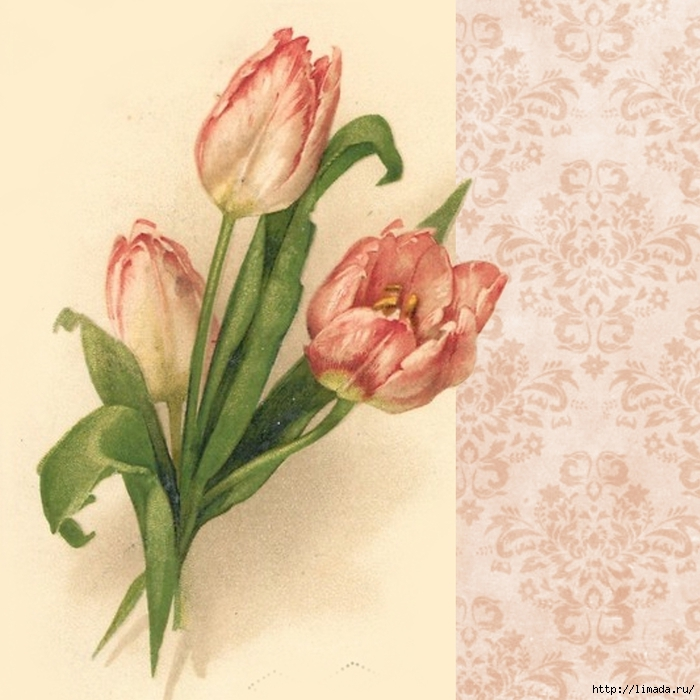 Pink tulips ~ 3x3 inch graphic ~ lilac-n-lavender (700x700, 290Kb)