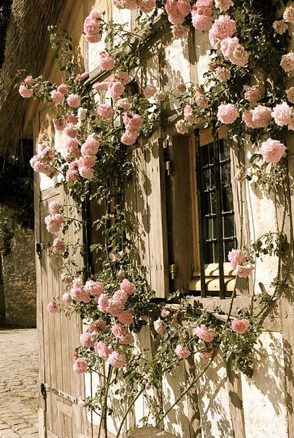 4497432_rosesingardeninspiration42 (430x640, 158Kb)