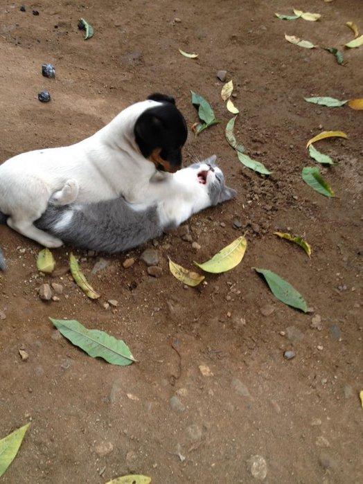 1368559016_funny_animals_20130513_02734_019 (524x700, 84Kb)