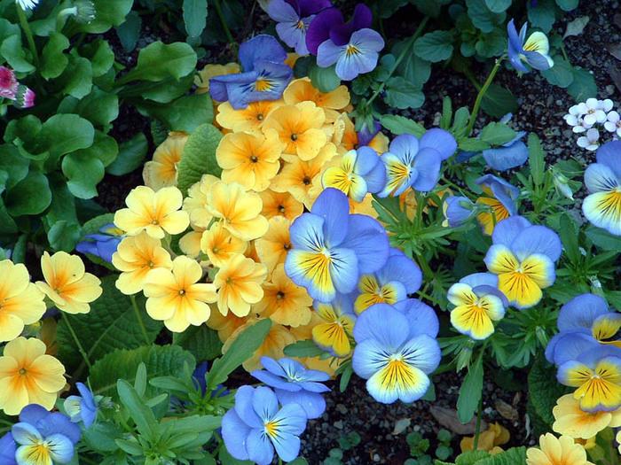 kwiatki (700x525, 187Kb)