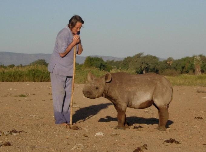 носорог джимми фото (680x501, 72Kb)