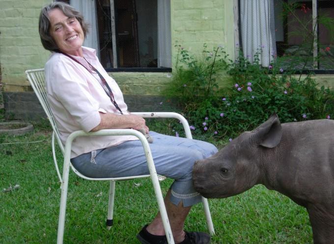 носорог джимми фото 7 (680x497, 110Kb)