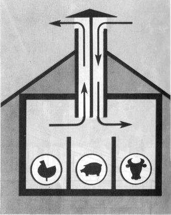 Вентиляция.  Температурный режим в помещении, где содержат животных, поддерживается за счет тепла, выделяемого их...