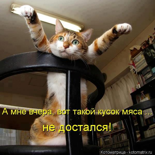 kotomatritsa_30 (600x600, 53Kb)