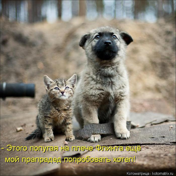 kotomatritsa_b9 (700x700, 72Kb)