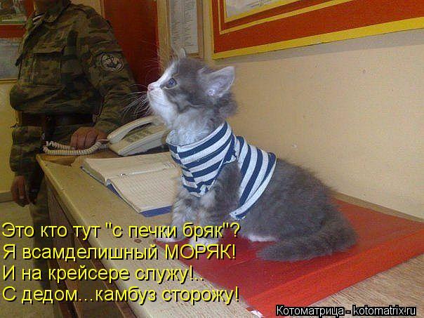 kotomatritsa_Pt (604x453, 55Kb)