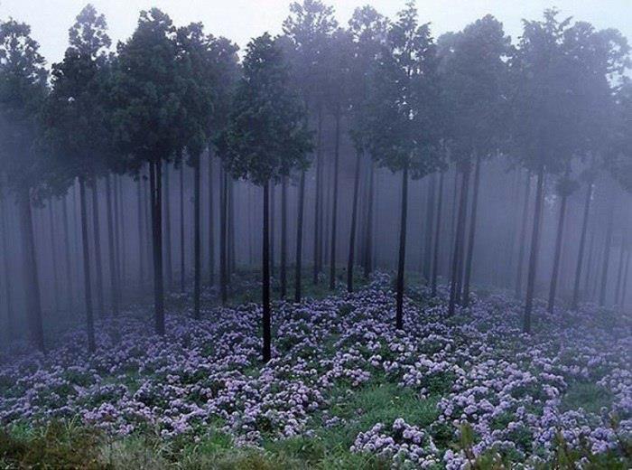 Утренний лес, Япония (700x520, 67Kb)