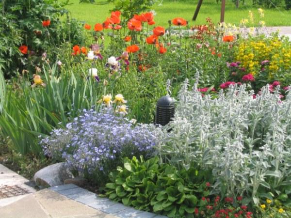Лекарственные растения в ландшафтном дизайне
