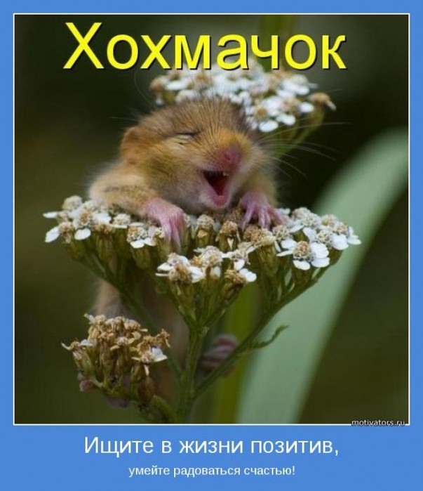 http://img0.liveinternet.ru/images/attach/c/8/100/974/100974612_large_Ichitevgiznipozitiv610x707.jpg