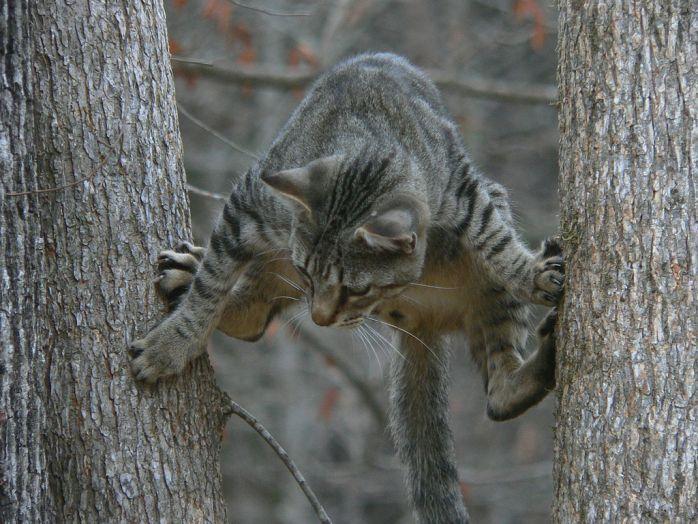 Gymnastics in the nature cat