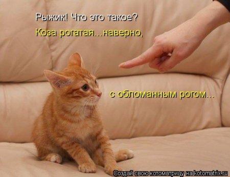 1352724128_kotomatritsa_aj (450x348, 26Kb)