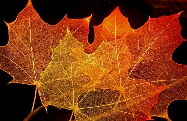 Как сделать прозрачные листья деревьев - Шкаф и точка